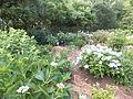 Kobe Municipal Arboretum in 2013-6-22 No,6.JPG