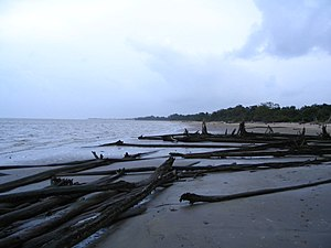 Guianan mangroves - Beach in Kourou, French Guiana, where it starts to turn into a mangrove