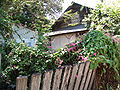 Kourou fence pink flowers vine.jpg