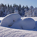 Krokskogen - where the trolls live ) (4363163241).jpg