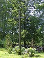 Krucifikss pie Skaistas Sv. Jaunavas Marijas Romas katoļu baznīcas, Skaistas pagasts, Krāslavas novads, Latvia - panoramio.jpg