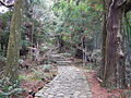 Kumano Kodo pilgrimage route Daimon-zaka World heritage 熊野古道 大門坂18.JPG