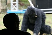 Silhouette view of Kagame from behind, with an out of focus mountain gorilla visible in the background
