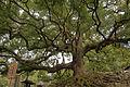 Kyoto Shorenin01n4272.jpg