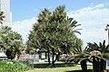 La Palma - Santa Cruz - Plaza de la Constitución + Yucca 02 ies.jpg