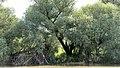 Lacul Beleu priveliște 21.jpg