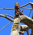 Lamartine Cedar by Rudy Rahme.jpg