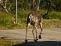 Lapland - Urho Kekkonen National Park - 20180728173258.jpg