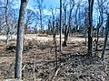 Laurel Hill cemetery 20190328 140118.jpg