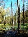 Leśny staw - panoramio (1).jpg