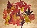 Leaves (2054541747).jpg