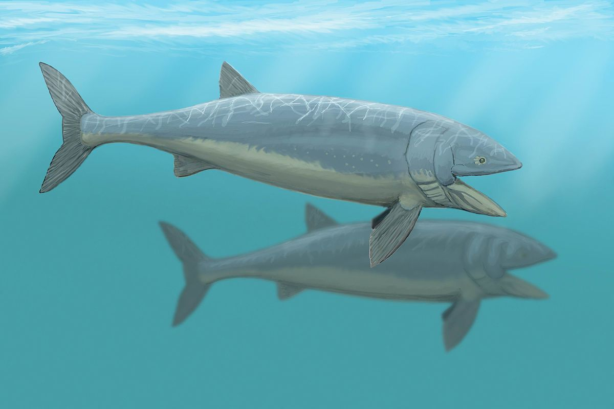 Leedsichthys wikipedia for Types of bony fish