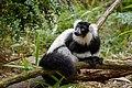 Lemur (26992490668).jpg