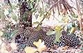 Leopard Senegal.jpg