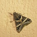 Lepidoptera (15884287697).jpg
