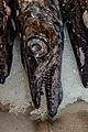 Lepidopus caudatus - Mercado Municipal Funchal 01.jpg