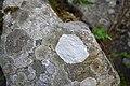 Lichen (6).jpg