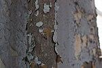 Liggett Hall Gymnasium - Cracked paint.jpg