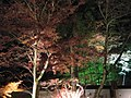 Light-up in Arashiyama - panoramio.jpg