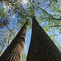 LightandShadowTrees.jpg