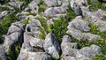 Limestone Pavement. Malham Cove - Flickr - gailhampshire.jpg