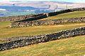 Limestone Walls - geograph.org.uk - 1202147.jpg