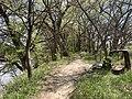 Linear Trail on the Kansas River in Manhattan, Kansas.jpg
