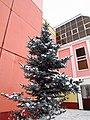 Little blue spruse near the school. January 2014. - Маленькая голубая ель возле школы. Январь 2014. - panoramio.jpg