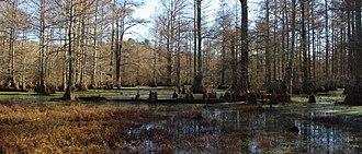 Little River National Wildlife Refuge - Image: Little river nwr cypress slough