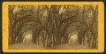 Live Oak Avenue in Bonaventure, from Robert N. Dennis collection of stereoscopic views.png