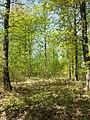 Locatelliwald westlich des Buchbergs sl1.jpg