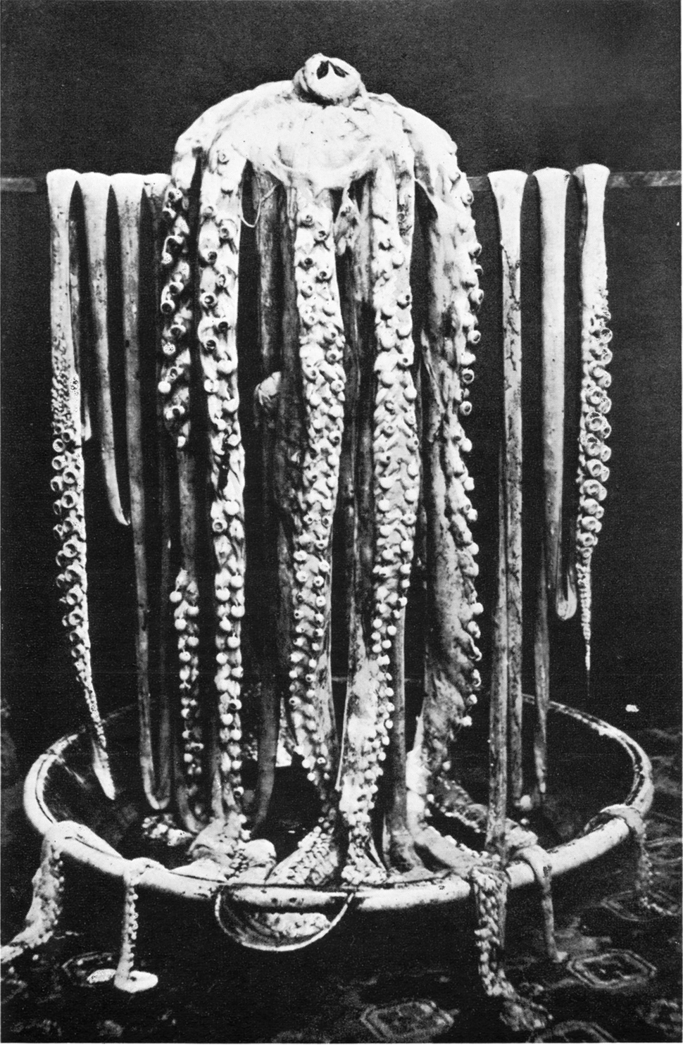 Logy bay giant squid 1873