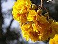 Luang Prabang Botanic Gardens (32725430314).jpg