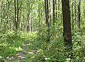 Lubovskiy les.JPG
