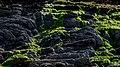MICRO LADSCAPE (4).jpg