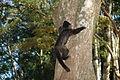 Macaco em Tibaji 190708 REFON 5.JPG