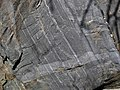 Magnetite banded iron formation (Soudan Iron-Formation, Neoarchean, ~2.69 Ga; Rt. 169 roadcut between Soudan & Robinson, Minnesota, USA) 2 (18418478564).jpg
