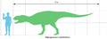 Majungasaurus scale1.png