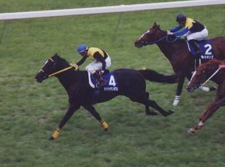 Manhattan Cafe Japanese-bred Thoroughbred racehorse