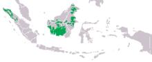 Areale delle due specie di orango (in verde)
