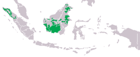 Range of the two orangutan species