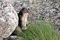 Marmotta (12).jpg