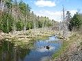 Marsh Island Wetland - panoramio.jpg