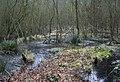Marshland near Hunger Hill - geograph.org.uk - 1210106.jpg