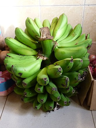 East African Highland bananas - A bunch of East African Highland bananas