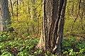 Matson's Woods (1) (8666442005).jpg