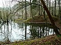 Meadowcliff Pond - Steam Mills Forest of Dean - geograph.org.uk - 1025383.jpg