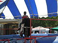 Mechanical bull at 2008 San Mateo County Fair 1.JPG