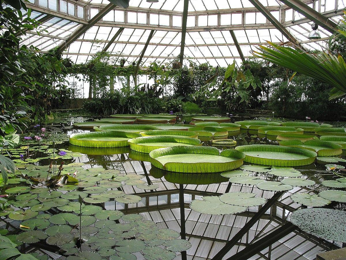 Jardin botanique de chenshan wikip dia - Botanischer garten shanghai ...