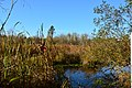Mercer Slough Nature Park 05.jpg